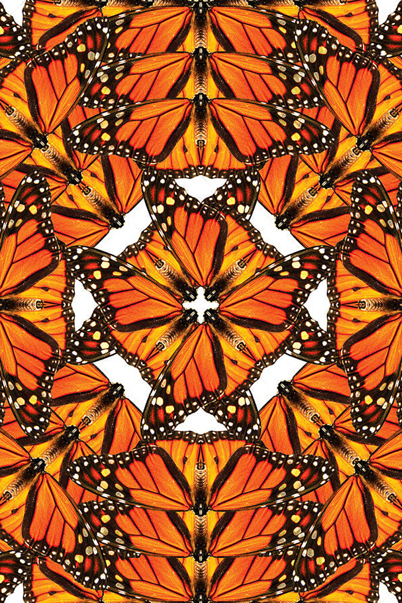 How Monarch Butterflies Are Actually Nature's Nurses